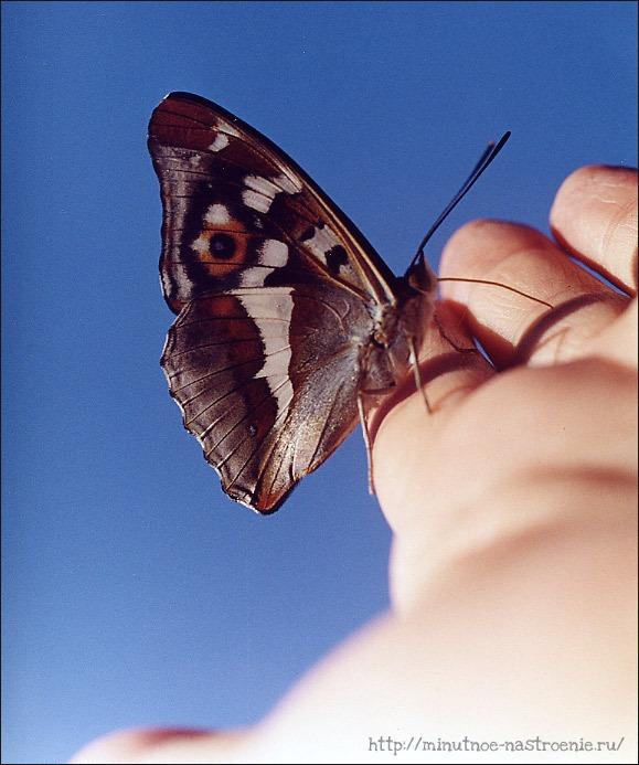 Секреты счастья бабочка в руке