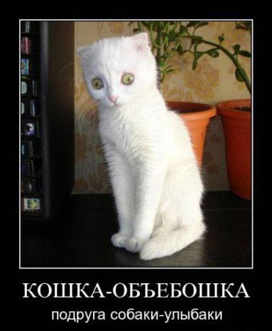 Кошка-объебошка