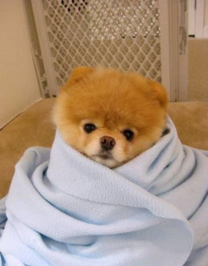Фото Самая знаменитая собачка фейсбука