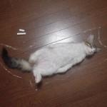 sleeping-animals-04