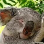 sleeping-animals-06