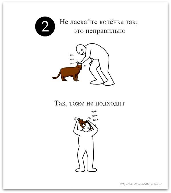 как правильно ласкать кота 2
