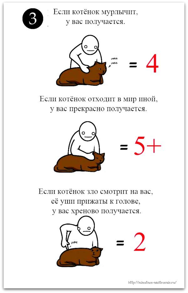 как правильно ласкать кота 3