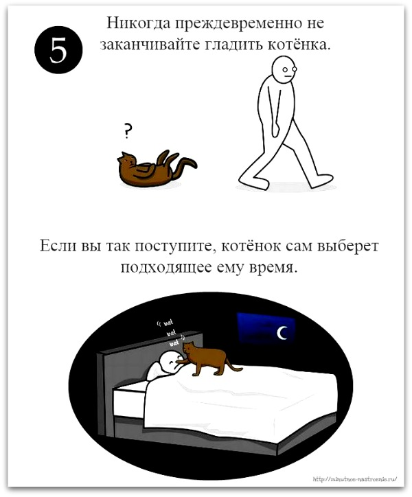 как правильно ласкать кота 5