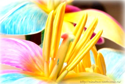 Радужные цветы 10