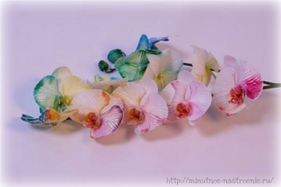 Радужные цветы 12