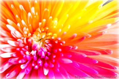 Радужные цветы 8