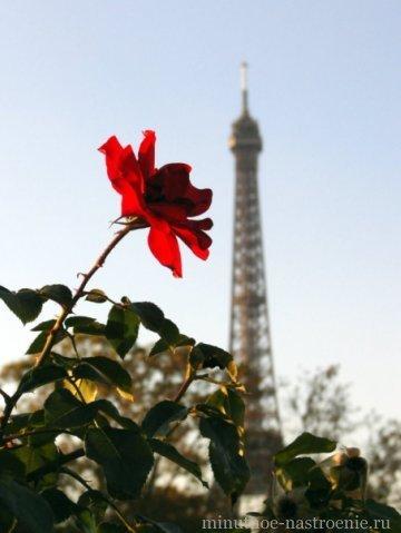 Эйфелевая башня с розой