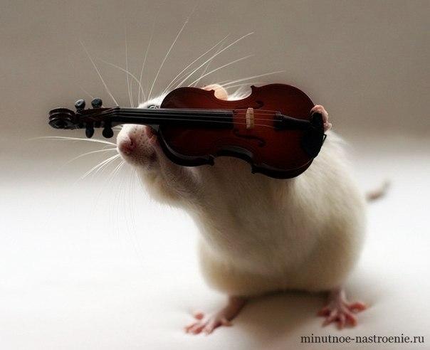 мышка с гитарой