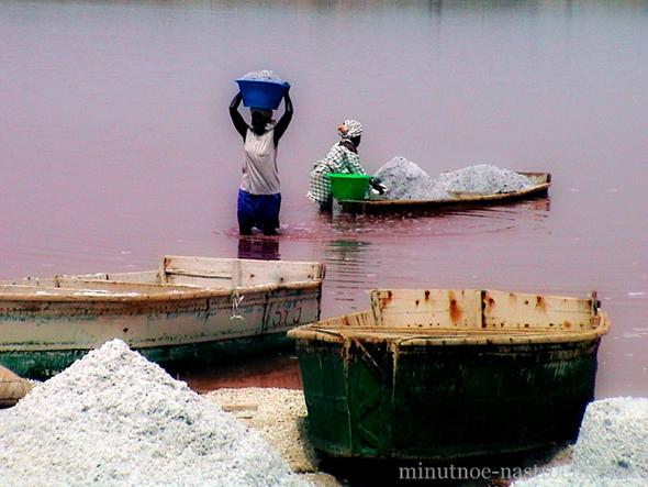 розовое озеро лов рыбы