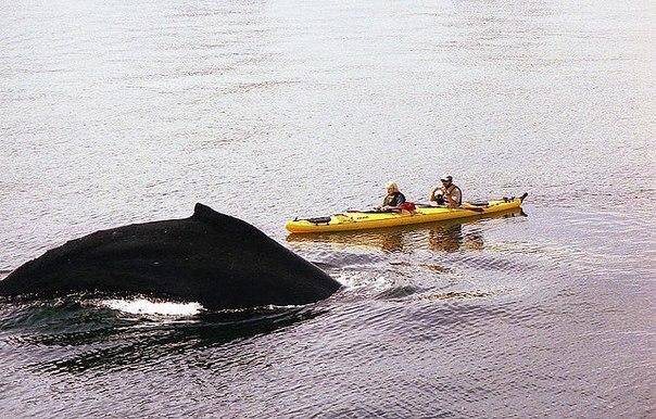 Путешествие на байдарке с китами на Аляске