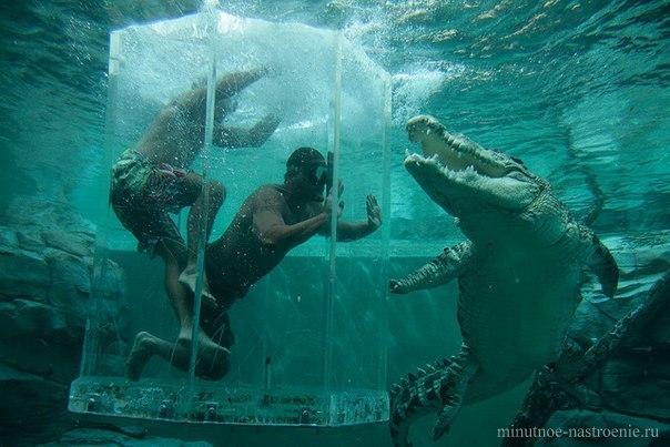 в клетке с крокодилами
