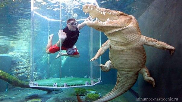 купание с крокодилом фото
