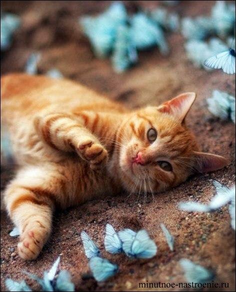 кот с бабочками фото