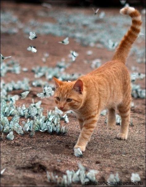кот и голубые бабочки играют