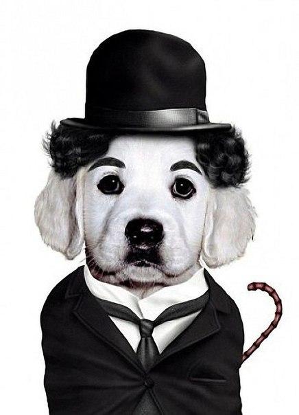 Животные ввиде знаменитостей чарли чаплин