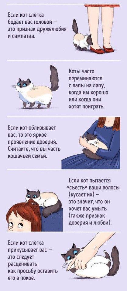 Как подружиться с котом, практические советы