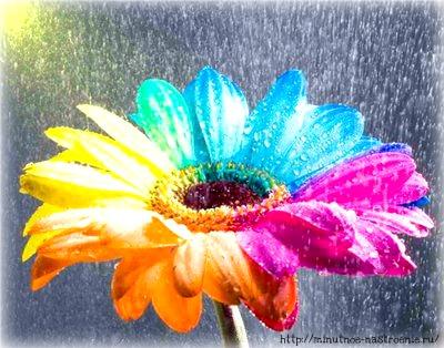 Радужные цветы 13