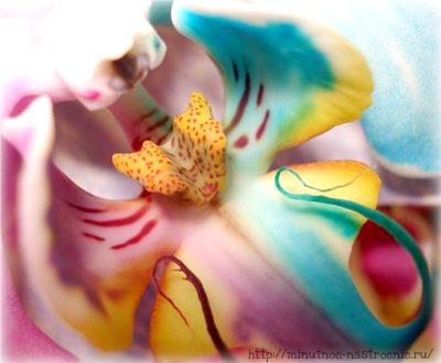 Радужные цветы 6