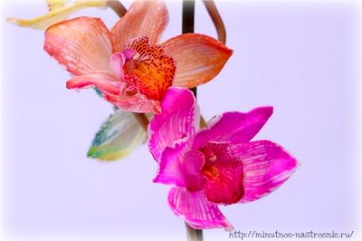 Радужные цветы 7