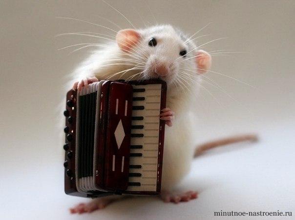мышка с аккордеоном