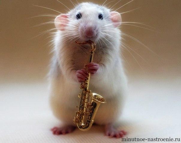 мышка играет на трубе фото