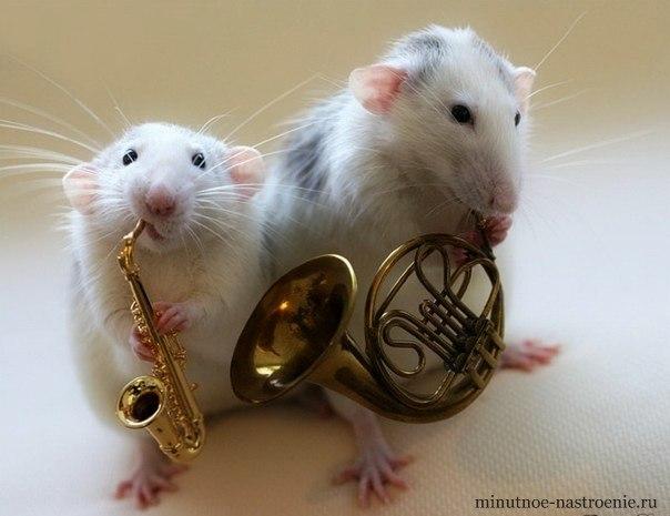 мышки играют на саксофоне и трубе