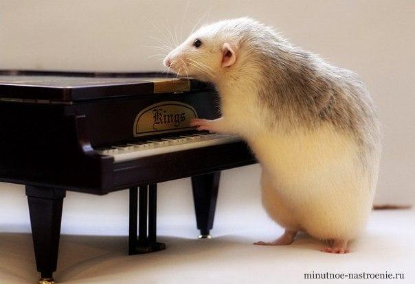 мышка играет на пианино