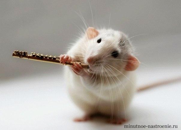 мышка играет на флейте фото