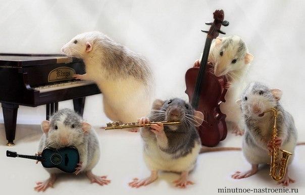 мышки музыканты фото