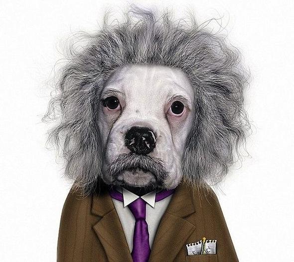 Животные в виде знаменитостей эйнштейн