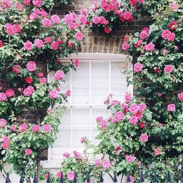 Цветущий Лондон